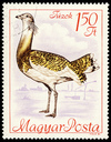 Great Bustard