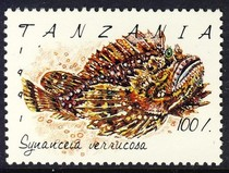 Stonefish synanceia verrucosa pictures and facts for Stone fish facts