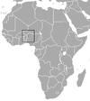 savanna swamp shrew