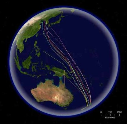 bar-tailed godwit migration