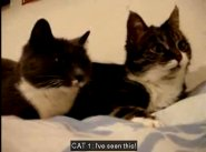 Cats talking English
